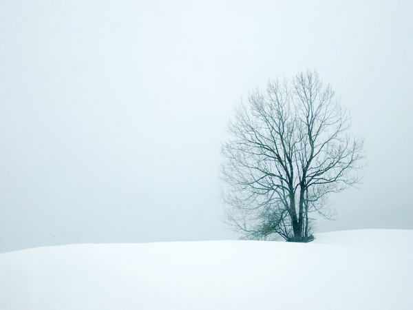 Lonely Snow Tree