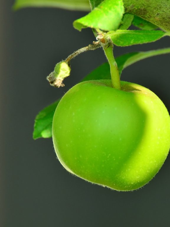 Apple With Good Flavor!